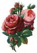 vintage rose clip art, vintage rose decoupage, some free print items. Clip Art Vintage, Vintage Diy, Vintage Images, Victorian Flowers, Vintage Flowers, Art Floral, Flower Prints, Flower Art, Illustrations Vintage