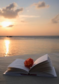 Coco Palm Bodu Hithi Resort in Maldives reading at the beach and a sunset --> paradise.reading at the beach and a sunset --> paradise. I Love Books, Good Books, Maldives Resort, Photo D Art, Book Photography, Belle Photo, Book Lovers, Serenity, Scenery