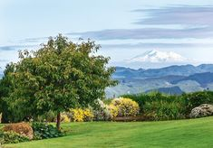 A backyard view to envy (and admire) #nzhouseandgarden #styleoctober #gardens