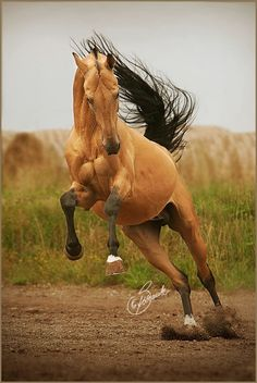 The musculature on this horse's face is amazing and kinda weird.
