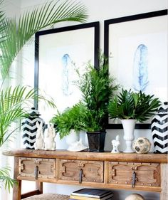 Lesapea Musings...: decor trend: exotic home plants