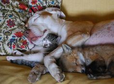 A fox, a kitten, and a dog.  Oh my god. All the cute just exploded and ended up in one place.