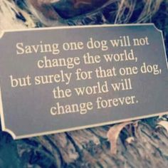 Adopt a rescue dog, give him or her a forever home