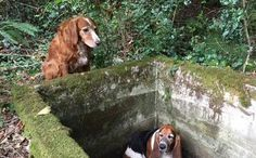 Old Dog Watches Over Trapped Buddy for a Week Until Help Arrives