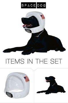 """""""Space Dog"""" by mangoexotic ❤ liked on Polyvore featuring art"""