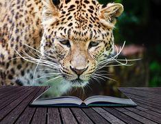 Ako sa stať vnútorne silným, alebo učte sa od tých, ktorí prekážky zdolali Animals, Animales, Animaux, Animal, Animais