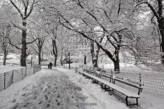 Snow Storm NYC Central Park 2016