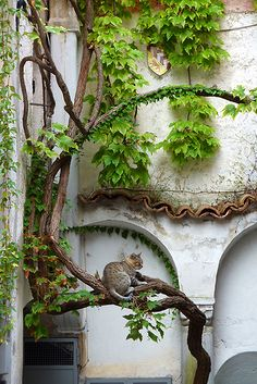 cat in vines
