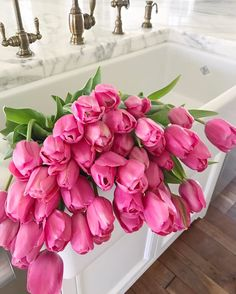 pink tulips, bright tulips, tulip bloom, flowers, spring flowers