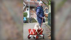 Tierische Liebe - Kater Ernie (5) folgt uns überall hin