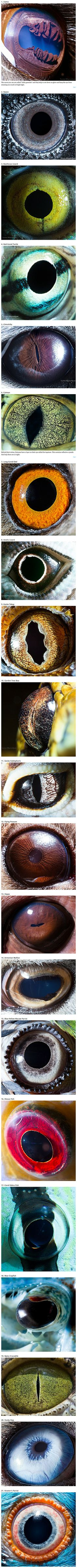Armenian photographer Suren Manvelyan has a preoccupation with the windows to your soul. That's right, he takes pictures of eyes! His series on animal eyes is absolutely stunning, and it shows how much something so simple can vary between species. From parrots to llamas, each of his macro photographs show how perfectly adapted each eye is to its owner's unique life.