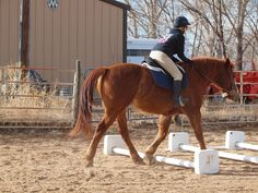 """I remember quite well the time when a show horse over the age of 8 or 10 was considered """"old"""". Those days are long gone as appreciation for the experience and levelheadedness of older horses has become appreciated. Nevertheless, there are some special considerations with exercising an older horse. What constitutes """"old"""" can be highly  Continued"""