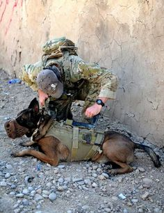 Australian Special Operations Task Group (SOTG) Soldier checks the chest rig on an SOTG Military Working Dog. #beastmode