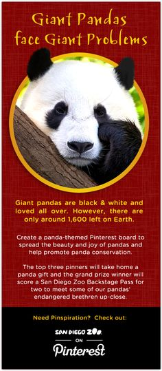 Please support the San Diego Zoo's efforts to educate guests about Giant Pandas, Come to Night Zoo Celebrations