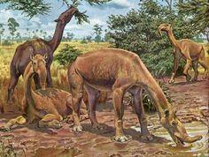 Macrauchenia was a long-necked and long-limbed, three-toed South American ungulate mammal, typifying the order Litopterna. Prehistoric Wildlife, Prehistoric Dinosaurs, Prehistoric World, Prehistoric Creatures, Wildlife Art, Dinosaur Art, Dinosaur Fossils, Vida Animal, Extinct Animals