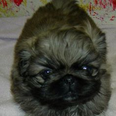 its so adorable :D <3 <3 <3 i love it its so cute