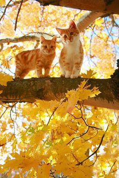 Cats and autumn