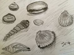 Jo Hannah. Shell 2. Pencil doodles.