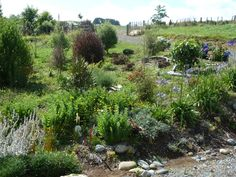 Plant a mixed shelter belt to filter the wind. The natives attract tuis and fantails close to the house.