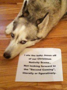 Dog Shaming - I ate baby Jesus from the Nativity