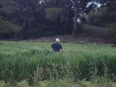 Plot evaluation in Southern Spain (2011)