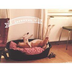 #chillmode on! ;-) Malcolm unser #maskottchen wünscht euch ein hervorragendes Wochenende! #vienna #tirza #picoftheday #homesweethome #relaxed #dogslife Toddler Bed, Instagram Posts, Photography, Furniture, Home Decor, Child Bed, Photograph, Photography Business, Photoshoot