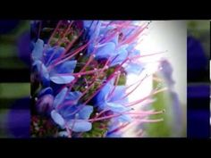 Abraham Hicks ~ We now have Step 4 - YouTube