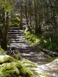 My inner landscape Tasmania, Forest Path, Australia Travel, Hiking Trails, The Great Outdoors, Wonders Of The World, Places To See, Beautiful Places, National Parks