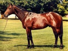 Bates Motel(1979)Sir Ivor- Sunday Purchase By T.V. Lark. 4x5x5 TO Bull Dog, 5x5 To Nearco. 19 Starts 9 Wins 1 Second 4 Thirds. $851,050. Won Santa Anita Derby(G1), Monmouth H(G1), San Antonio H(G1), San Diego H(G3), San Mateo County Sophomore H, 2nd Woodward(G1), 3rd Marlboro Cup Inv H(G1), Affirmed H. 1983 Champion U.S. Older Male. Died In 2004.: