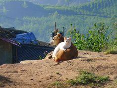 Echinacea gatto cane, immunostimolante nelle patologie dell'apparrato respiratorio, stomatite, ESTRATTI IDROENZIMATICI, ECHINACEA SENZA ALCOL PER I PETS