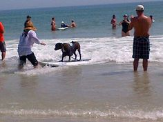 Surfers for Autism Event July 2012 Love our SFA Family! Booker the surfing dog in Ponce Inlet, Florida July 2012
