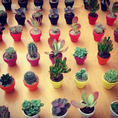 """Meet the """"gate-way"""" plant… a miniature easy-care succulent -! #succulents #easycare #thesill"""