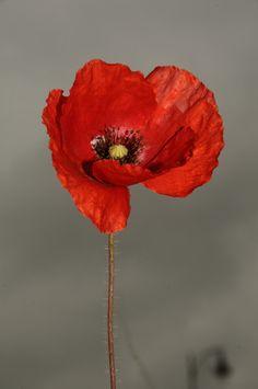 wowtastic-nature:Fleurs by Benslimane Lotfion 500px○nikon D300-f/18.0-1/160s-105mm, 2848✱4288px-rating:78.8☀Photographer:Benslimane Lotfi ,Fes ,Maroc
