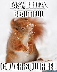 Easy, Breezy, Beautiful: Cover Squirel | cover girl | meme | parody | cute animals | too cute