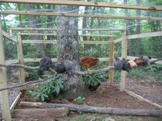 Building A DIY Chicken Coop If you've never had a flock of chickens and are considering it, then you might actually enjoy the process. It can be a lot of fun to raise chickens but good planning ahead of building your chicken coop w Urban Chicken Coop, Chicken Roost, Chicken Coop Run, Diy Chicken Coop Plans, Portable Chicken Coop, Chicken Pen, Chicken Garden, Chicken Coop Designs, Backyard Chicken Coops