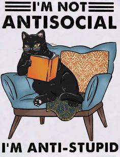 Cute Cats, Funny Cats, Funny Animals, Cute Animals, Funny Cat Memes, Crazy Cat Lady, Crazy Cats, Black Cat Art, Cat Posters