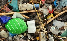 How to Plan a Beach Cleanup