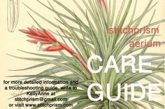 An in depth guide for how to care for your tillandsia air plant hanging aerium garden.