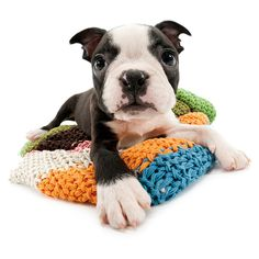 Artlist Collection THE DOG calendars are best seller dog calendar in Japan over 10 years. Now we have THE CAT, THE PIG and more animals. Cute Puppies, Cute Dogs, Dogs And Puppies, Doggies, I Love Dogs, Puppy Love, Boston Terrier Love, Boston Terriers, Expensive Dogs