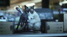 Grumpy Paint Ball Gun.jpg