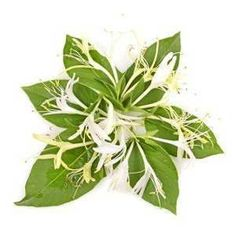 Honeysuckle Oil  2 dram Annointing oil Scent by TheSilverGoddess