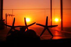 珊瑚と夕日