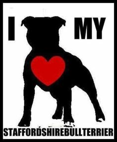 . I Love Dogs, Cute Dogs, Puppy Love, Staffy Dog, Dogs Pitbull, Pitbull Terrier, Bullterrier Tattoo, Animals And Pets, Cute Animals