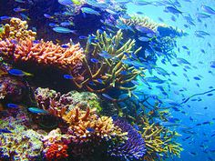 Great Barrier Reef Dive