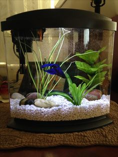 A 2 5 gallon tank with a beautiful betta this is a small for How much are betta fish