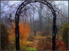 Fog in the Garden
