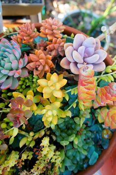 "flora-file: ""When nighttime temps drop into the the succulents begin their autumn glow. I'm still not sure how this photo came out of my camera. "" fall colors (by flora-file) "" "" Succulent Gardening, Planting Succulents, Container Gardening, Planting Flowers, Succulent Plants, Sempervivum, Air Plants, Garden Plants, House Plants"