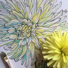noelbadgespugh: color beginning Watercolor Sketchbook, Pen And Watercolor, Watercolor Flowers, Botanical Illustration, Illustration Art, Illustrations, Floral Drawing, Drawing Flowers, Observational Drawing