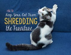 How to Keep your Cat from Shredding the Furniture | eBay