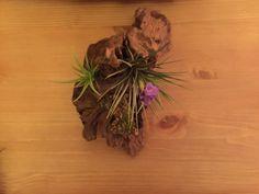 Valentine's Day Driftwood and Tillandsia ( Air Plant ) Gift Idea via @plantjungle0569